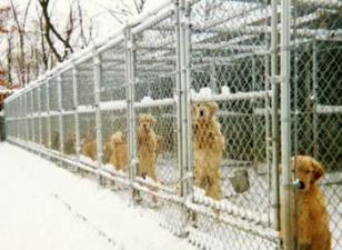 The Kennels - Hillock Goldens - Golden Retrievers - Ligonier, Pennsylvania
